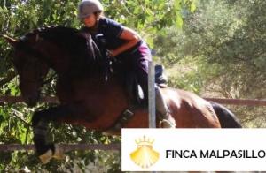 Clase de equitación + Paseo a caballo