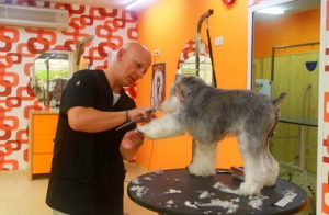 Sesión de peluquería canina!